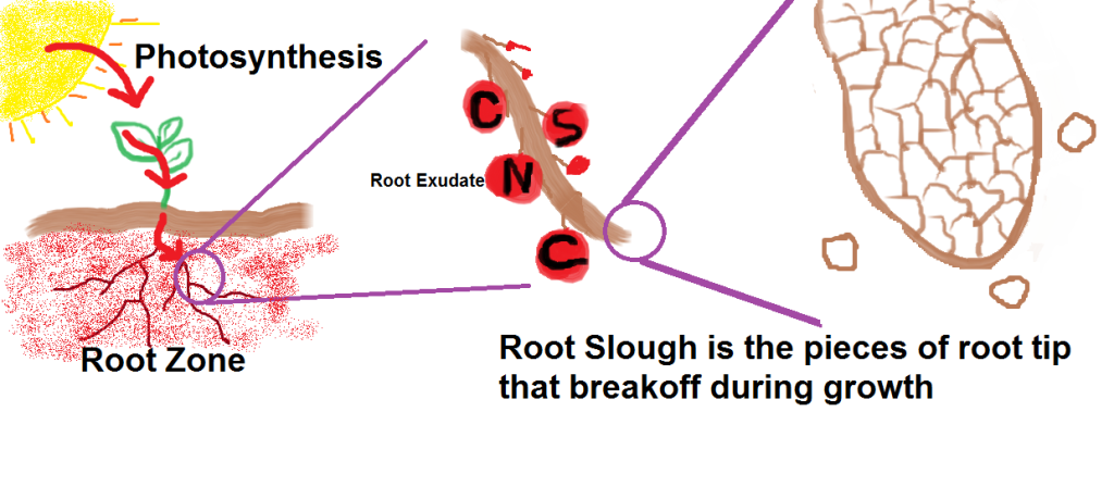 root slough